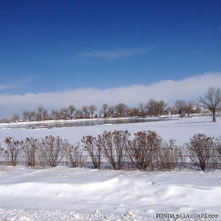 Ronda Palazzari Colorado Snow