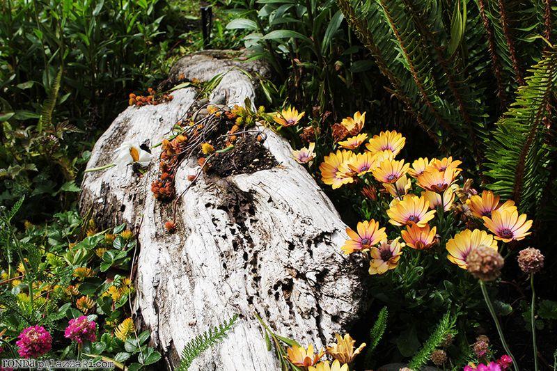 Ronda Palazzari Wildflowers and Driftwood