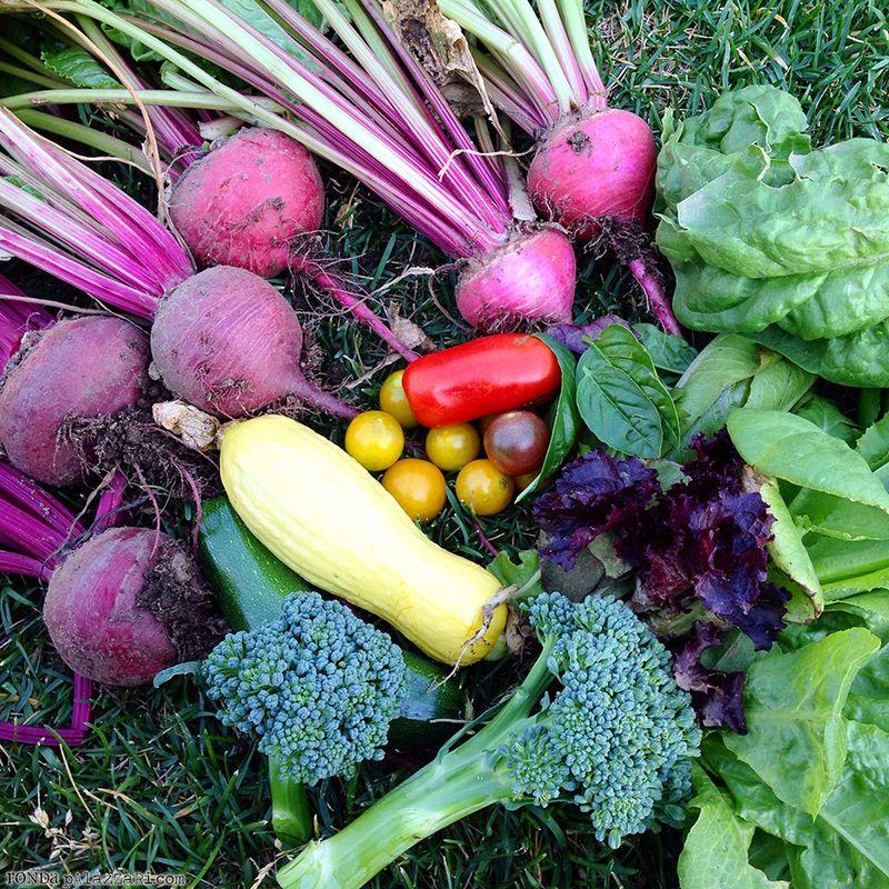 Ronda Palazzari Colorful Harvest