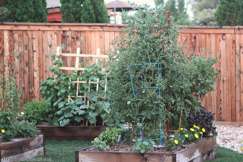 Ronda Palazzari Gardening 16