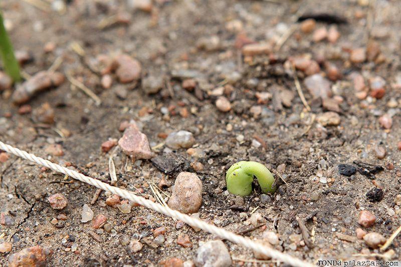 Ronda Palazzari Gardening 8