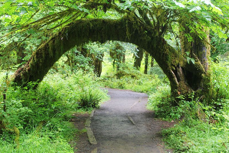 Ronda Palazzari Forest Path 2