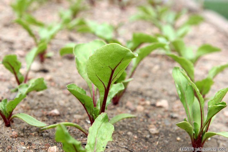 Ronda Palazzari Gardening 10