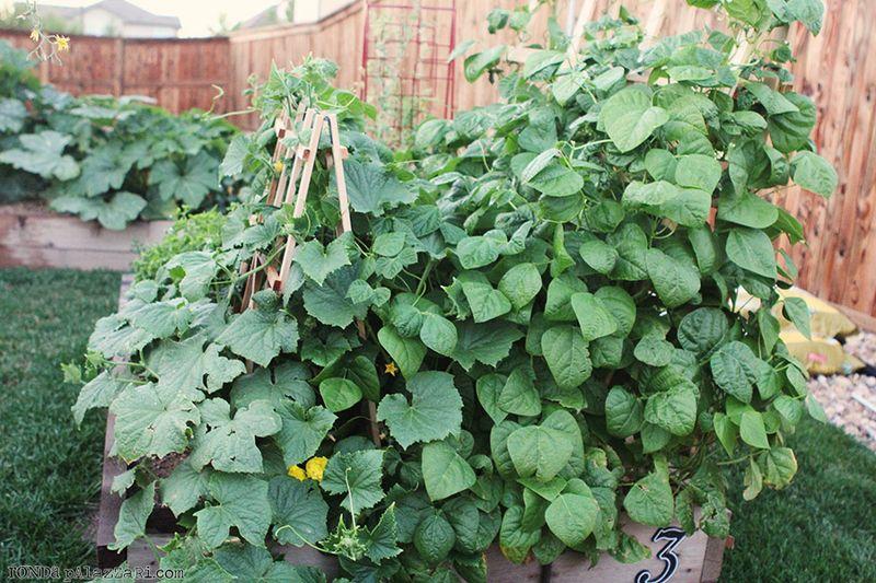 Ronda Palazzari Gardening 22