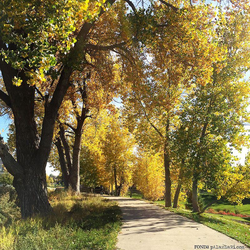 Ronda Palazzari Fall Trees