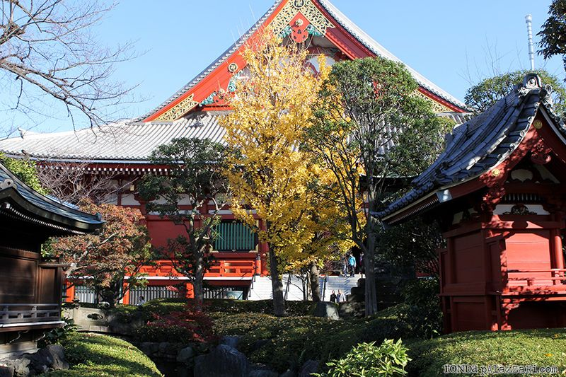 Ronda Palazzari Tokyo 12