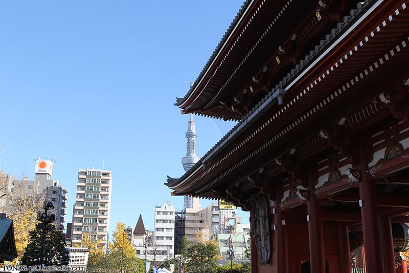 Ronda Palazzari Tokyo 14